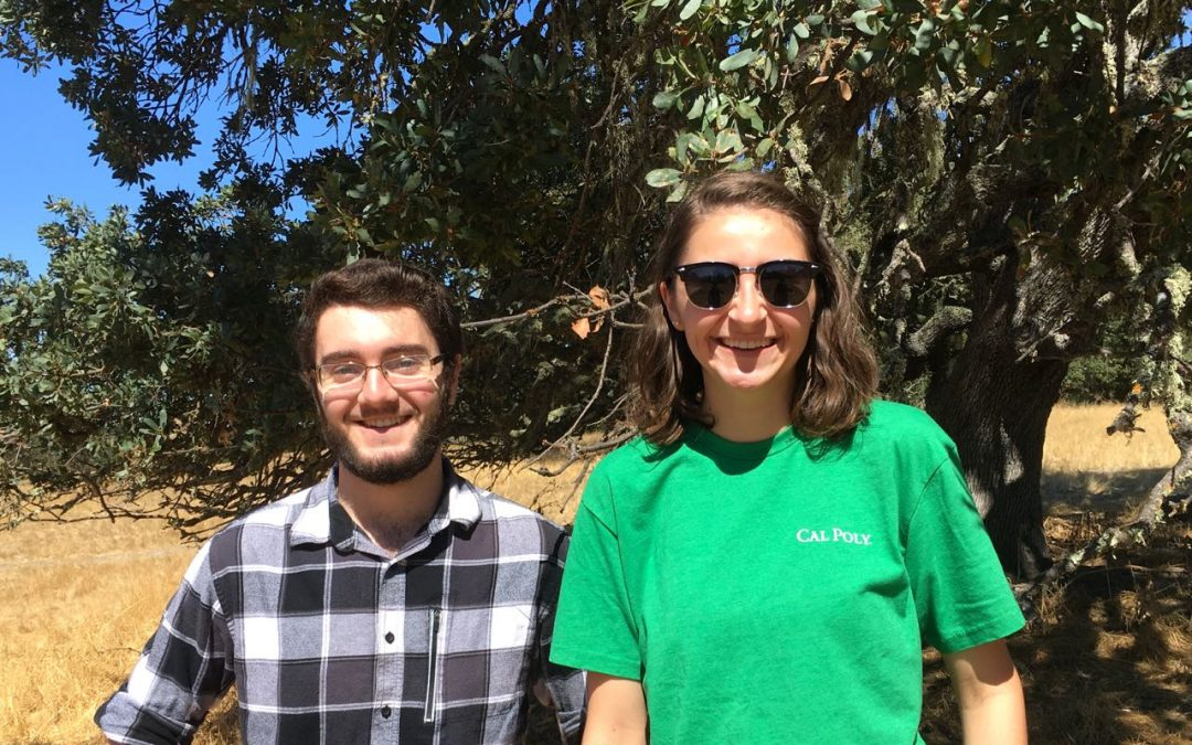 Meet the LATO Interns!