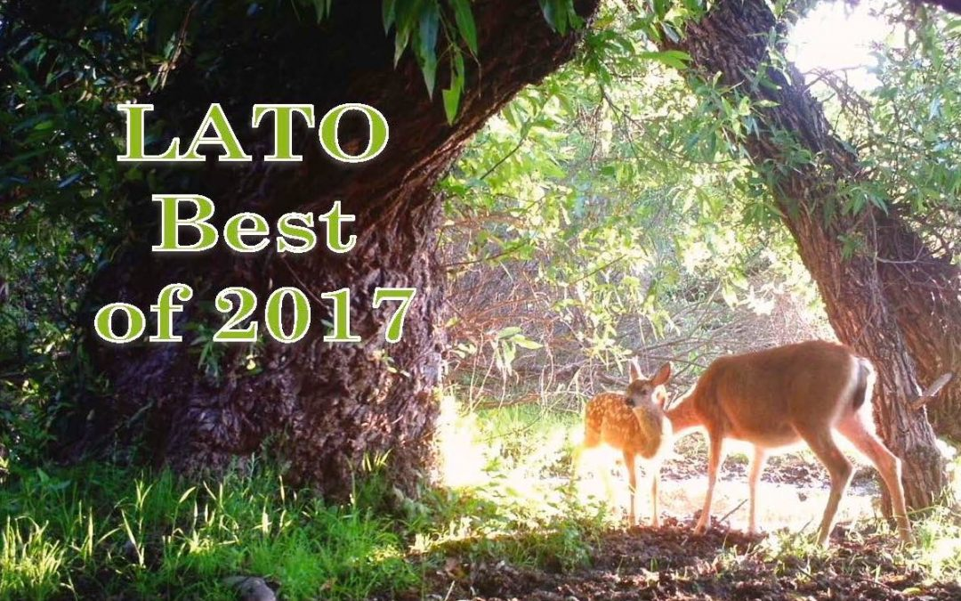 LATO 2017 Highlights